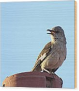 This Spring's Mockingbird Wood Print