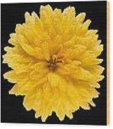 This Yellow Chrysanthemum Wood Print