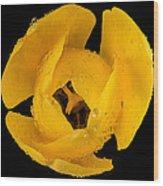 This Yellow Tulip Wood Print