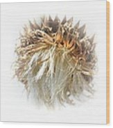 Thistle Abstract 14-1 Wood Print