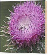Thistle And The Bee Wood Print