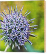 Thistle Wood Print by Andrew Lalchan