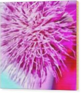 Thistle Beauty Wood Print