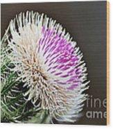 Thistle Bloom Wood Print