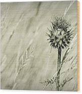 Thistle - Dreamers Garden Series Wood Print