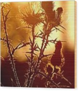 Thistle Edge Glow Wood Print
