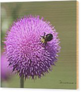 Thistle And A Bee Wood Print