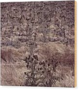 Thistle Field Wood Print