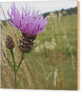 Thistle In A Swiss Field Wood Print