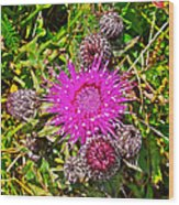 Thistle In Saint Mary's Ecological Reserve-newfoundland Wood Print