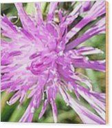 Thistle In Umbria Wood Print