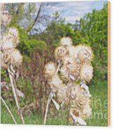 Thistle Me This Wood Print