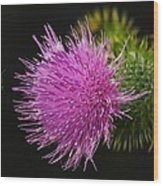 Thistle While You Work Wood Print