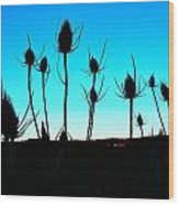 Thistles At Sunset Wood Print