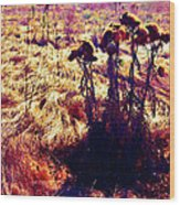 Thistles In A Summer Field Wood Print