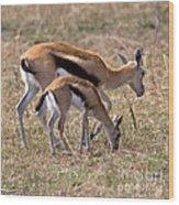 Thompson Gazelles Wood Print