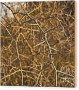 Thorn Bush Wood Print