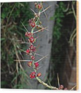 Thorns And Blooms Wood Print