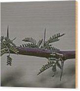 Thorns Of The Acacia Tree Wood Print