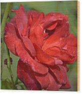 Thorny Red Rose Wood Print