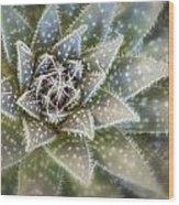 Thorny Succulent Wood Print
