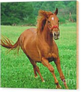 Thoroughbred Filly Wood Print