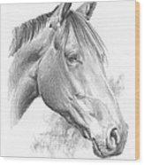 Thoroughbred Pencil Portrait Wood Print