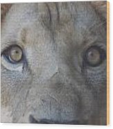 Those Lion Eyes Wood Print