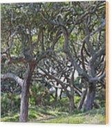 Jekyll Island Beach Path Wood Print by Ella Char