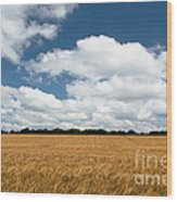 Thoughts Of A Wheatfield Wood Print