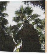 Thousand Palms Canyon Wood Print
