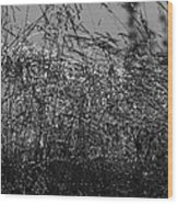 Thousands Of Shimmering Raindrops - Monochrome Wood Print