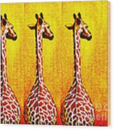 Three Amigos Giraffes Looking Back Wood Print