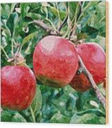 Three Apples On Tree Wood Print