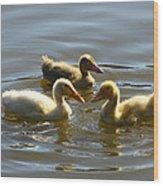 Three Baby Ducks Swimming Wood Print