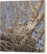 Three Baby Owls  Wood Print