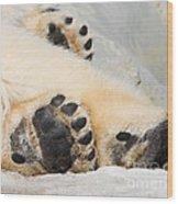 Three Bear Paws Wood Print