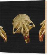 Three Blind Mice Wood Print by Jean Noren