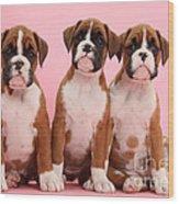 Three Boxer Puppies Wood Print