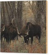 Three Bull Moose Sparring Wood Print