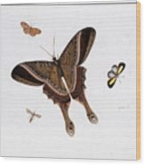 Three Butterflies And A Gnat Wood Print