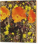 Three California Poppies Among Goldfields In Antelope Valley California Poppy Reserve Wood Print