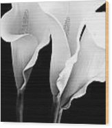 Three Calla Lilies In Black And White Wood Print