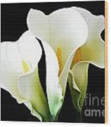 Three Calla Lilies On Black Wood Print