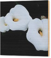 Three Calla Lilies Wood Print