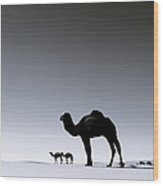 Three Camels In The Sahara Desert Wood Print