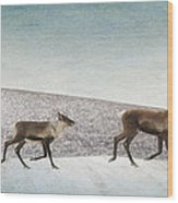 Three Caribous Wood Print by Priska Wettstein