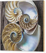 Three Chambered Nautilus Wood Print by Garry Gay