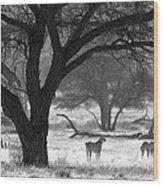 Three Cheetahs Wood Print