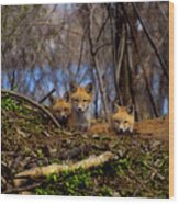 Three Cute Kit Foxes At Attention Wood Print
